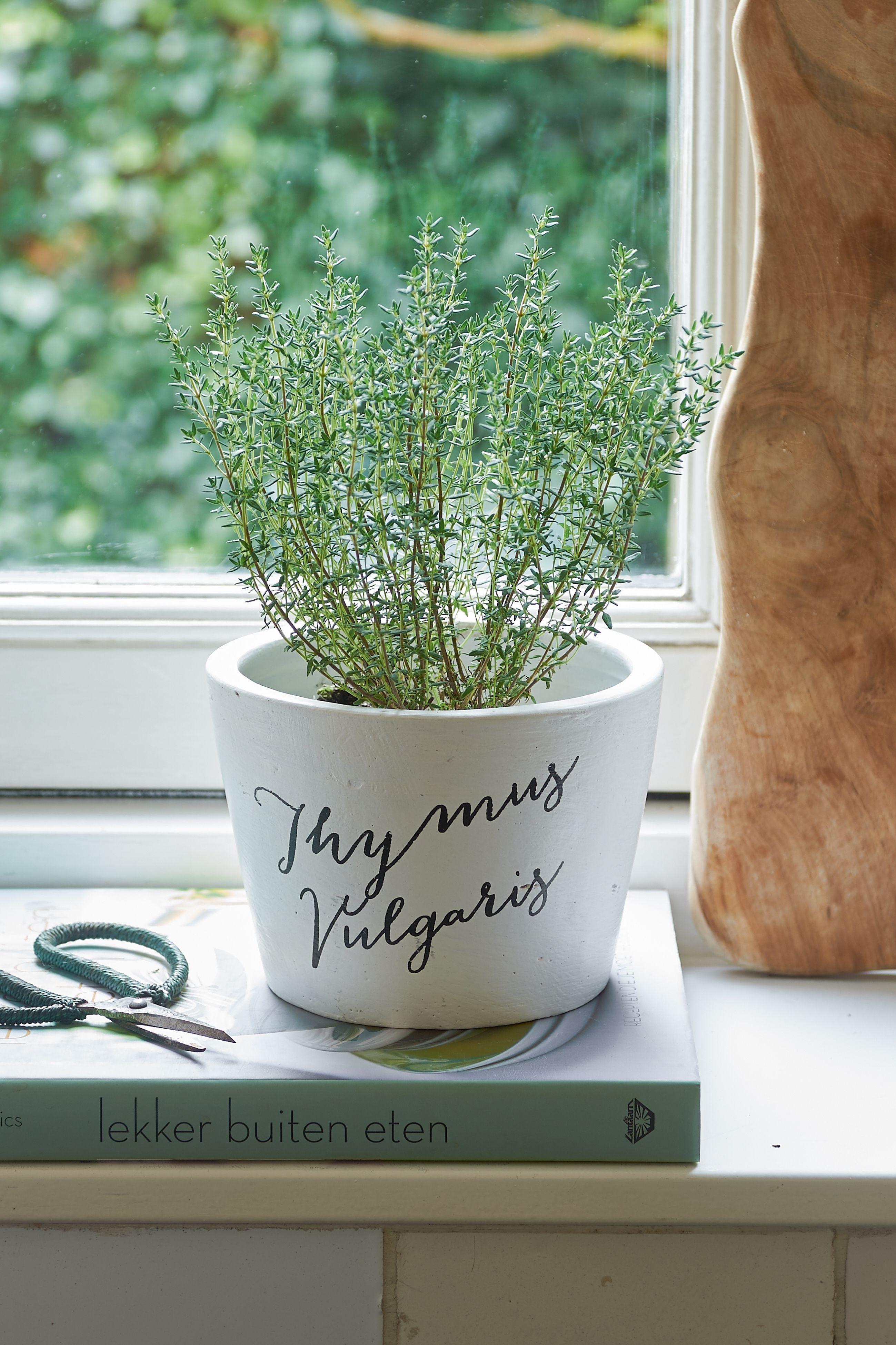 Květináč Tasty herbs Thymus Vulgaris