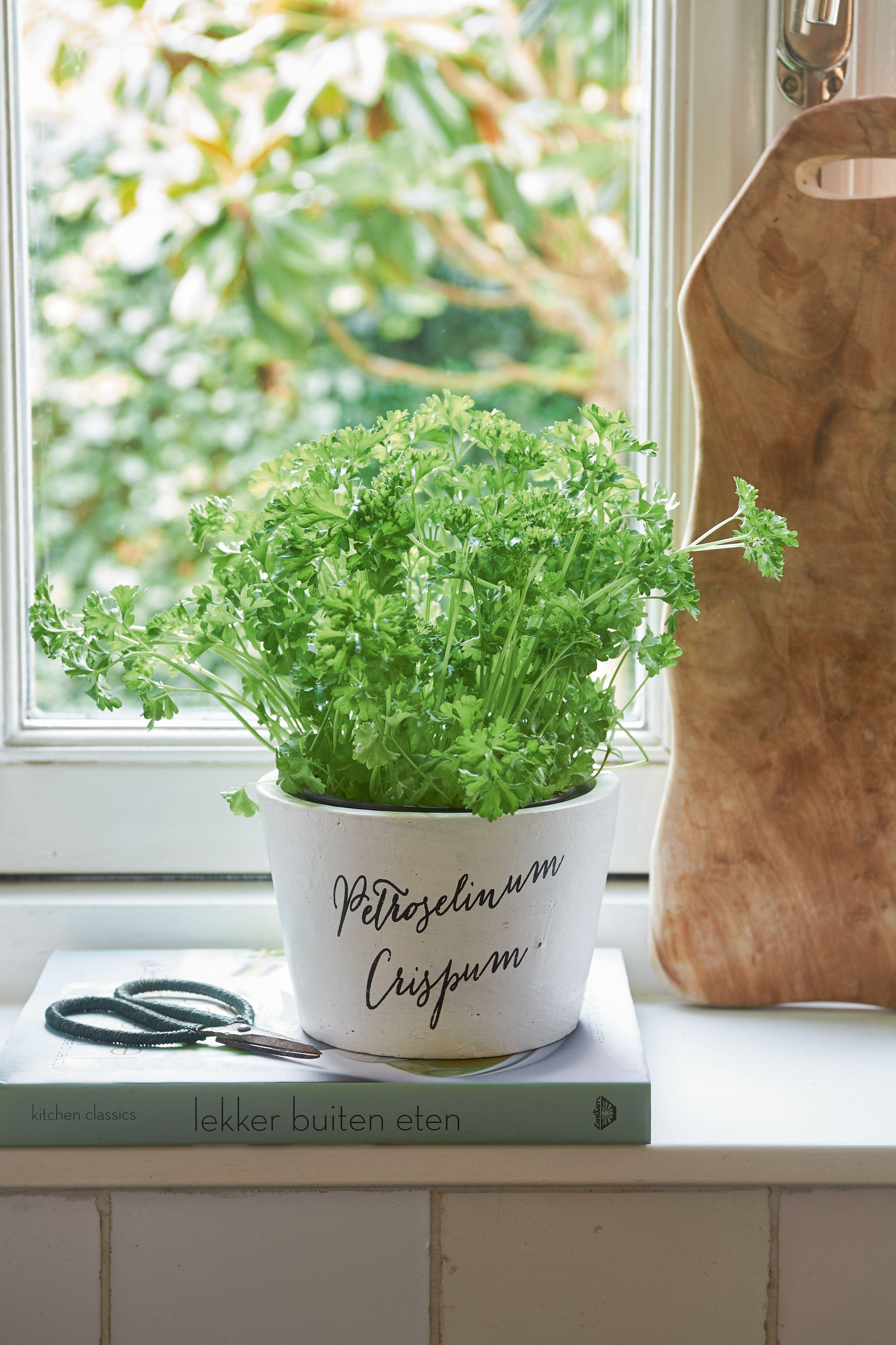 Květináč Tasty Herbs Petroselinum