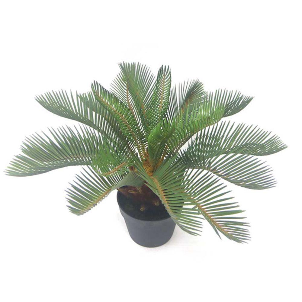 Plant - Palm Cycas