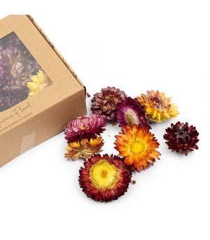 Sušené květy Summer Floral Deco Purple