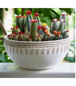 Kvetináč Serene Island Terracotta Pot L